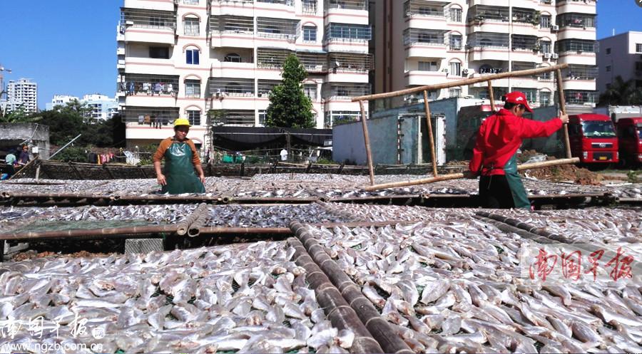 广西获财政部渔业发展补助资金2.3亿元