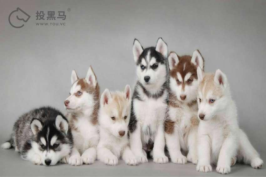 从食狗到宠狗:中国文化中的狗狗演变史 投黑马