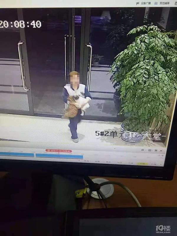 女子为护子被遛狗男子打致骨折 警方已传唤打人者