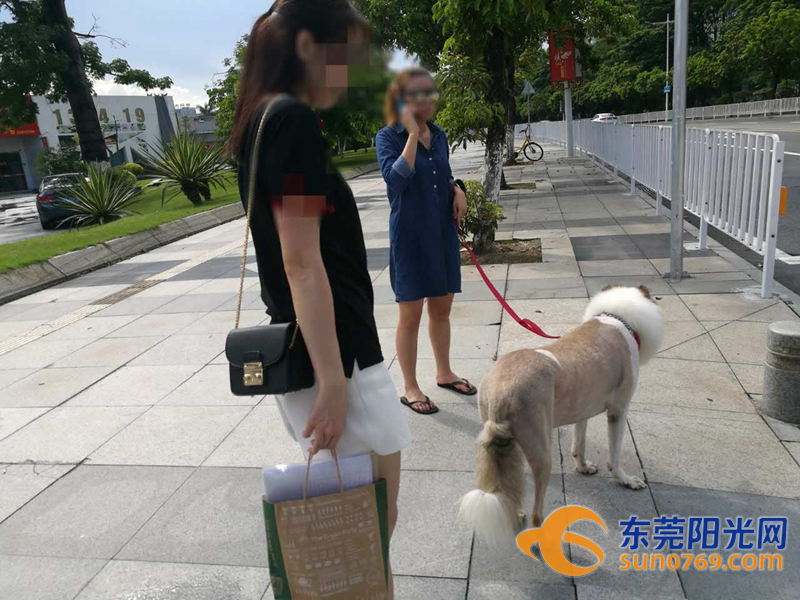 宠物狗索赔案:爱犬斑马线上被撞 对方说只赔两千