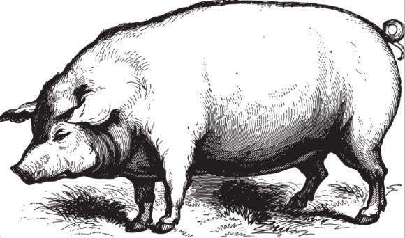 進口美國豬肉大幅回落 國內養殖戶集體受益
