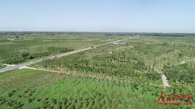 雄安新区明年再植树造林十万亩 每棵树都有二维码