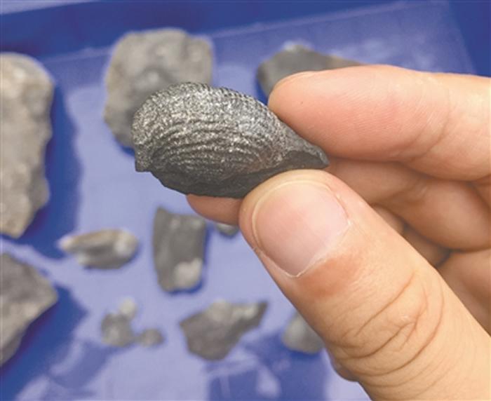 广佛交界山地发现珊瑚,腕足等古生物化石