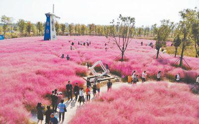 人民日报:淮安白马湖森林公园内秋意盎然