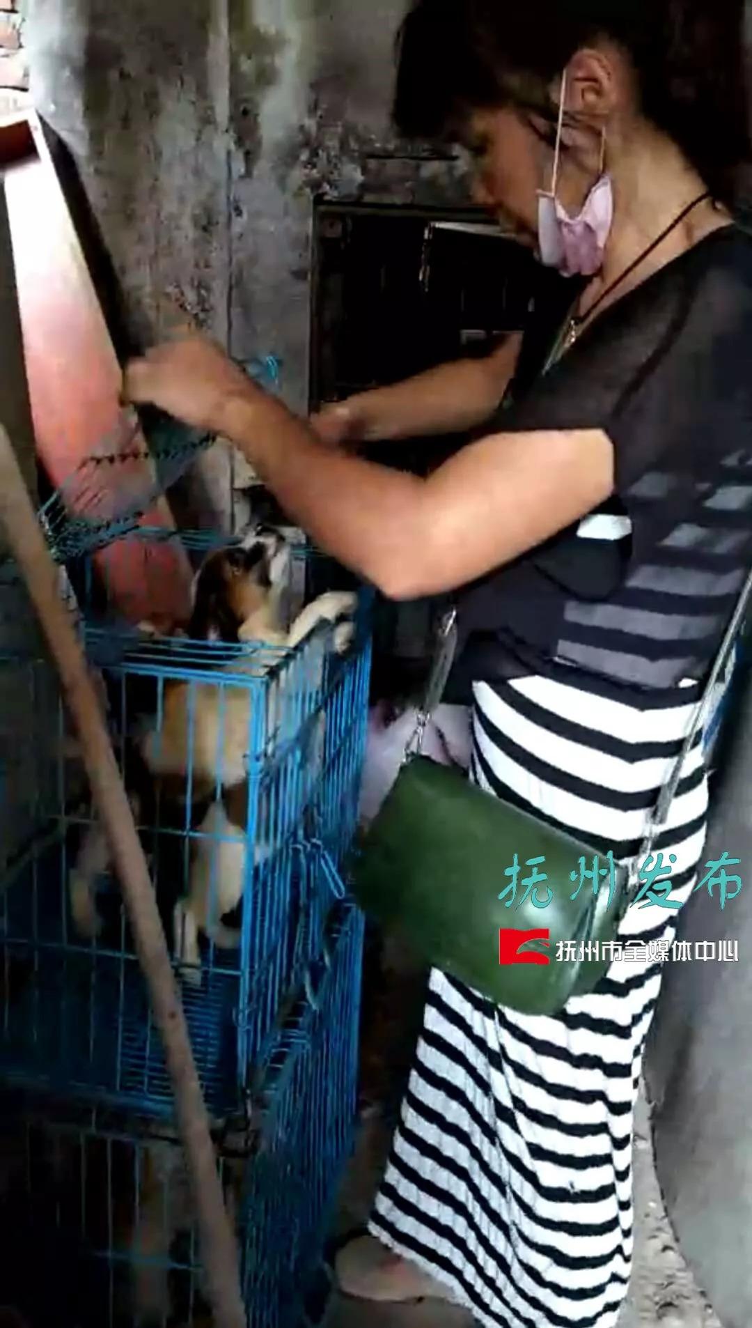 52岁女子年收养百只流浪狗:家人断绝来往 至今未婚