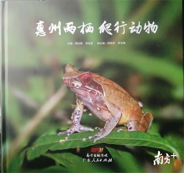 """奇妙的动物世界在惠州:他镜头下的""""飞鸟青蛙蜥蜴""""也卖萌!视频"""