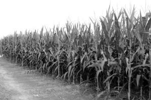祸起植物新品种权纠纷败诉万向德农上半年预亏504万元