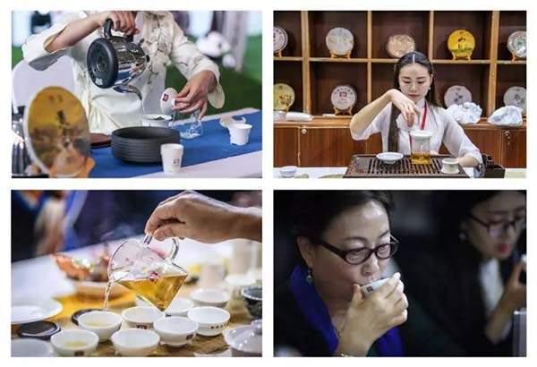 大益茶新品「黃金甲」亮相四川茶博會!