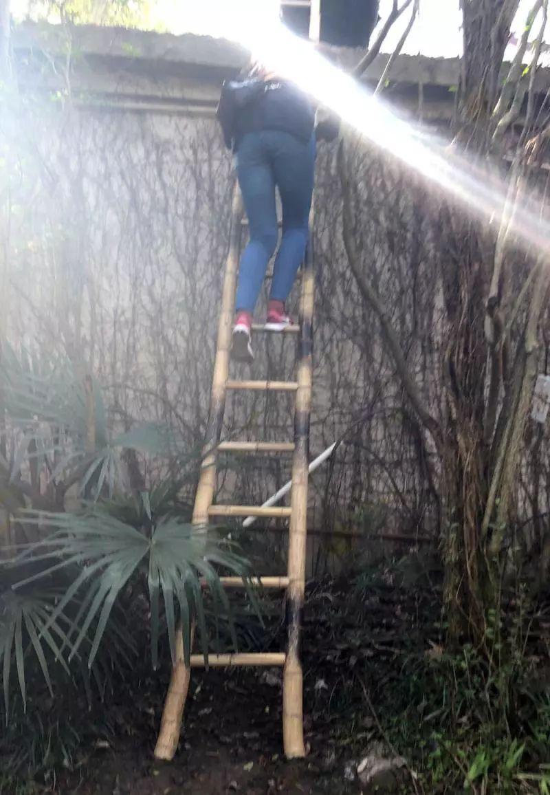上海野生动物园惊现翻墙逃票!4人团伙持续2年,每天助几十人逃票