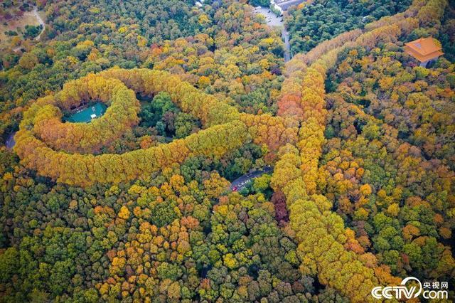 """南京钟山风景区层林尽染 美龄宫""""宝石项链""""景色如画"""