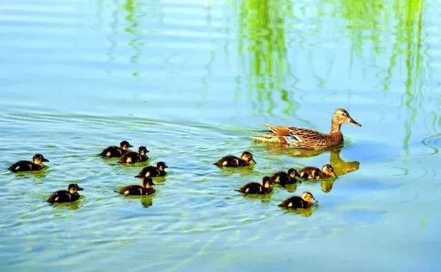 一下红山公园可爱的小动物们吧