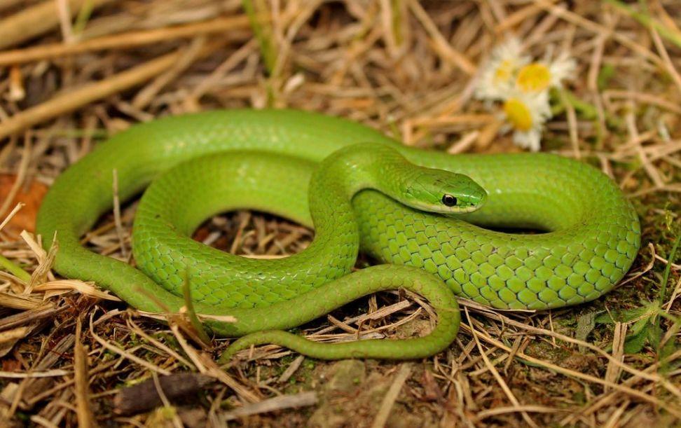 做梦蛇是什么意思_周公解梦 梦见蛇是什么意思