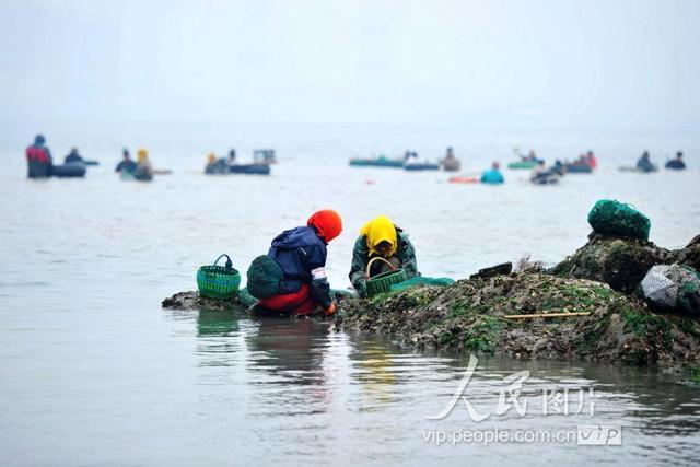 2018年12月22日,山东青岛西海岸新区唐岛湾南岸,市民在海水中赶海.