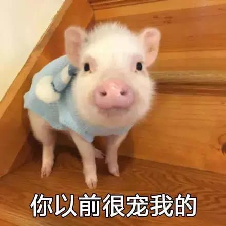 猪猪表情:你是不是可怜面有别的猪了!表情包在外图片图片