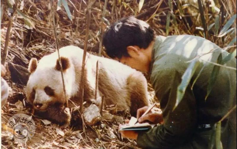 佛坪国家级自然保护区位于秦岭中段南坡,是以保护大熊猫,野生动物