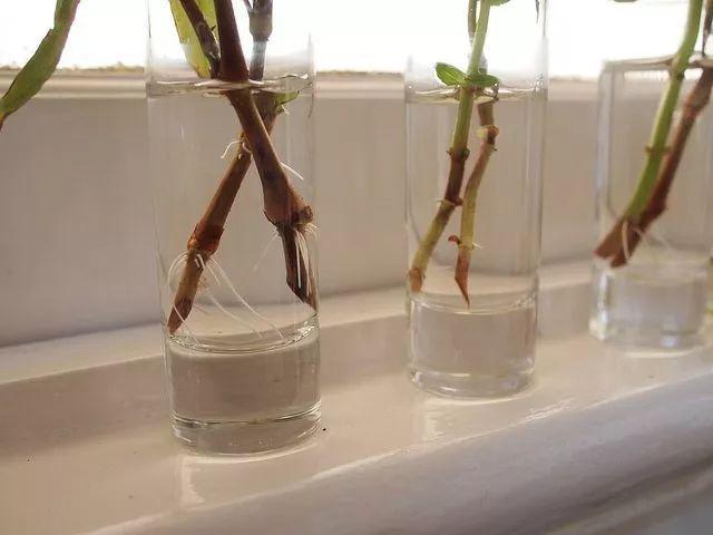 植物高矮对比简笔画