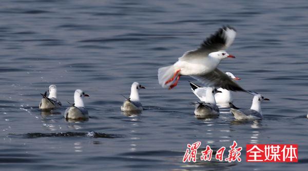 大荔朝邑候鸟国家前路美食越冬回公园大榕树湿地(娘家峰)怎么样图片